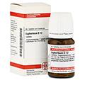 EUPHORBIUM D 12 Tabletten 80 Stück N1