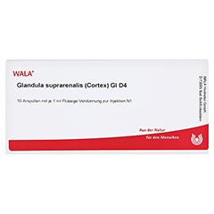 GLANDULA SUPRARENALIS cortex GL D 4 Ampullen 10x1 Milliliter N1 - Vorderseite