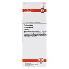 ORTHOSIPHON STAMINEUS Urtinktur D 1 50 Milliliter - Vorderseite