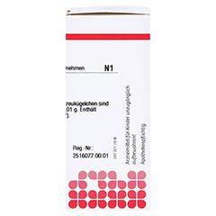 SULFUR C 30 Globuli 10 Gramm N1 - Rechte Seite