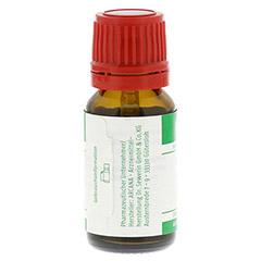 NATRIUM CARBONICUM LM 6 Dilution 10 Milliliter N1 - Rückseite