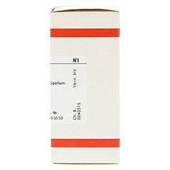 SPARTIUM SCOPARIUM D 4 Tabletten 80 Stück N1 - Rechte Seite