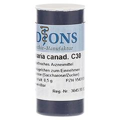SANGUINARIA CANADENSIS C 30 Einzeldosis Globuli 0.5 Gramm N1 - Linke Seite
