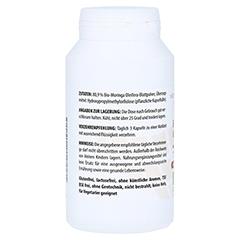 MORINGA OLEIFERA 500 mg Kapseln 120 Stück - Rechte Seite