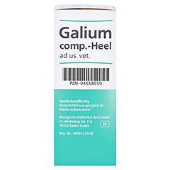 GALIUM COMP.-Heel ad us.vet.Tropfen 30 Milliliter - Rechte Seite
