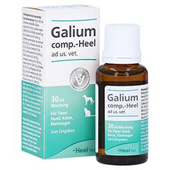 GALIUM COMP.-Heel ad us.vet.Tropfen 30 Milliliter