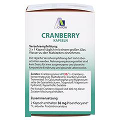 Avitale Cranberry 100 Stück - Linke Seite
