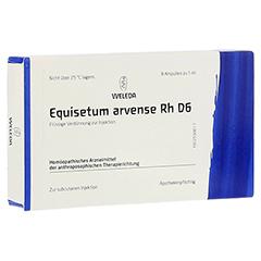EQUISETUM ARVENSE Rh D 6 Ampullen 8 Stück N1