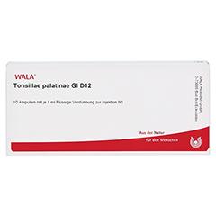 TONSILLAE palatinae GL D 12 Ampullen 10x1 Milliliter N1 - Vorderseite