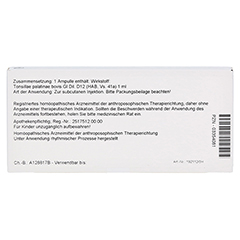 TONSILLAE palatinae GL D 12 Ampullen 10x1 Milliliter N1 - Rückseite
