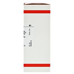 BELLIS PERENNIS EXTERN Tinktur 50 Milliliter N1 - Rechte Seite