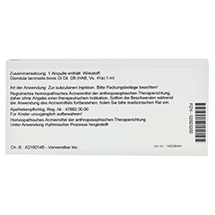 GLANDULA LACRIMALIS GL D 8 Ampullen 10x1 Milliliter N1 - Rückseite