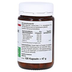 GRÜNTEE Extrakt Dr.Wolz Kapseln 120 Stück - Linke Seite