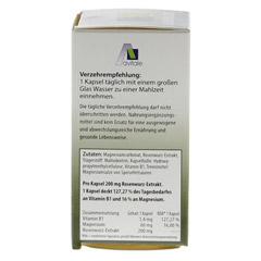 ROSENWURZ Kapseln 200 mg 60 Stück - Rechte Seite