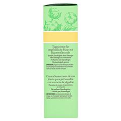 BURT'S BEES Sensitive Daily Moisturizing Cream 50 Gramm - Rechte Seite