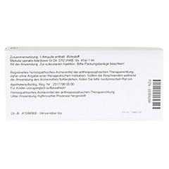 MEDULLA SPINALIS TOTA GL D 12 Ampullen 10x1 Milliliter N1 - Rückseite