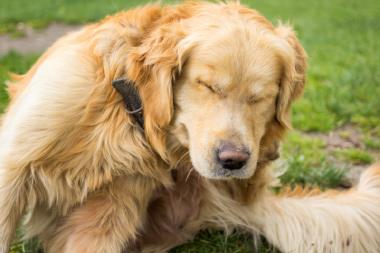 Themenshop Zecken Hund