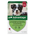ADVANTAGE 250 Lösung Hunde 10-25 kg 4 Stück