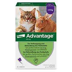 ADVANTAGE 80 mg Lösung große Katzen/Zierkaninchen 4x0.8 Milliliter