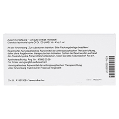 GLANDULA LACRIMALIS GL D 5 Ampullen 10x1 Milliliter N1 - Rückseite