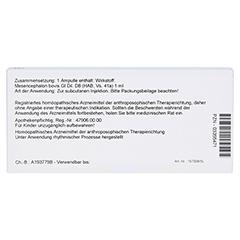 MESENCEPHALON GL D 8 Ampullen 10x1 Milliliter N1 - Rückseite