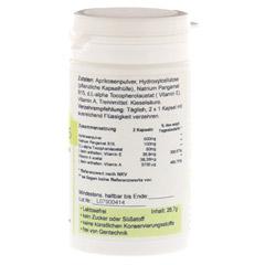 PANGAM Vitamin B15 Kapseln 60 Stück - Rechte Seite