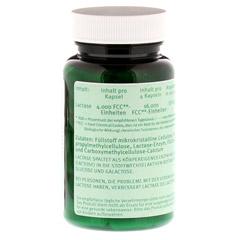 LACTASE 4.000 FCC Enzym Kapseln 100 Stück - Rückseite