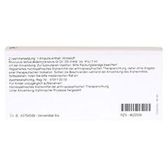 MUSCULUS RECTUS abdominis GL D 5 Ampullen 10x1 Milliliter N1 - Rückseite