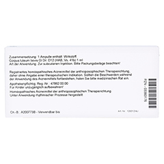 CORPUS LUTEUM GL D 12 Ampullen 10x1 Milliliter N1 - Rückseite