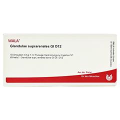 GLANDULAE SUPRARENALES GL D 12 Ampullen 10x1 Milliliter N1 - Vorderseite