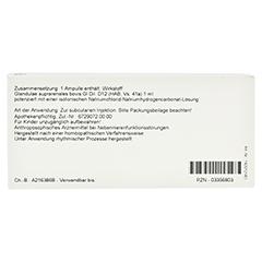 GLANDULAE SUPRARENALES GL D 12 Ampullen 10x1 Milliliter N1 - Rückseite