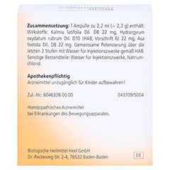 DISCUS compositum N mit Kalmia Ampullen 10 Stück N1 - Rückseite