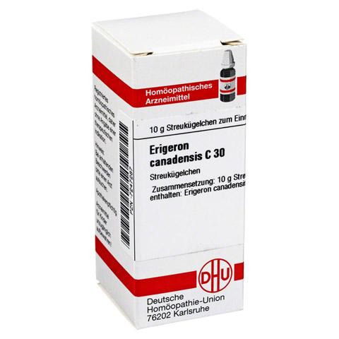 ERIGERON CANADENSIS C 30 Globuli 10 Gramm N1