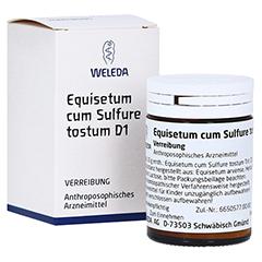 EQUISETUM CUM Sulfure tostum D 1 Trituration 20 Gramm N1