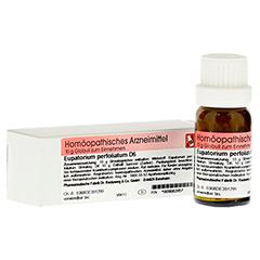 EUPATORIUM PERFOLIATUM D 6 Globuli 10 Gramm N1