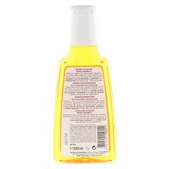 RAUSCH Kamillen Amaranth Repair Shampoo 200 Milliliter - Rückseite