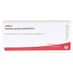 MEDULLA SPINALIS tota GL D 12 Ampullen 10x1 Milliliter N1 - Vorderseite