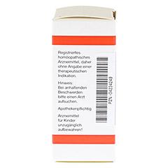 RHUS TOXICODENDRON C 4 Globuli 10 Gramm N1 - Linke Seite