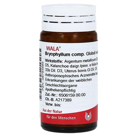 BRYOPHYLLUM COMP.Globuli 20 Gramm N1
