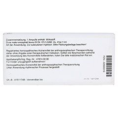DURA MATER encephali GL D 12 Ampullen 10x1 Milliliter N1 - Rückseite