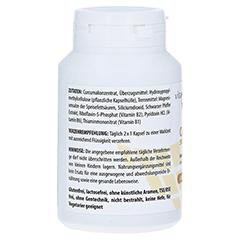 CURCUMA 500 mg Kapseln 120 Stück - Rechte Seite