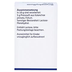 BRYOPHYLLUM 50% Pulver zum Einnehmen 50 Gramm N2 - Linke Seite