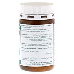 YAMSWURZEL WILD Yam 250 mg Kapseln 120 Stück - Rechte Seite