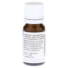BRYONIA D 6 Globuli 10 Gramm N1 - Rückseite