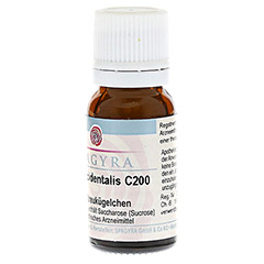 THUJA OCCIDENTALIS C 200 Globuli 10 Gramm N1 - Vorderseite