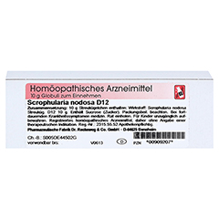 SCROPHULARIA NODOSA D 12 Globuli 10 Gramm N1 - Vorderseite