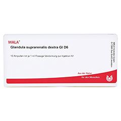GLANDULA SUPRARENALES dextra GL D 6 Ampullen 10x1 Milliliter N1 - Vorderseite
