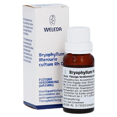 BRYOPHYLLUM MERCURIO cultum Rh D 3 Dilution 20 Milliliter N1