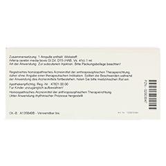 ARTERIA CEREBRI media GL D 15 Ampullen 10x1 Milliliter N1 - Rückseite