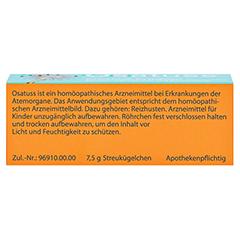 OSATUSS Globuli 7.5 Gramm - Unterseite